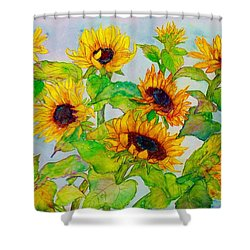 Sunflowers In A Field Shower Curtain