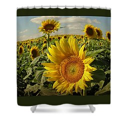 Kansas Sunflowers Shower Curtain
