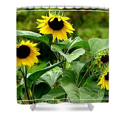 Sunflowers Shower Curtain by Rose Santuci-Sofranko
