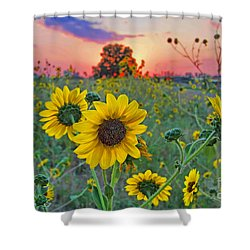 Sunflowers Sunset Shower Curtain