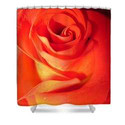 Sunkissed Orange Rose 10 Shower Curtain