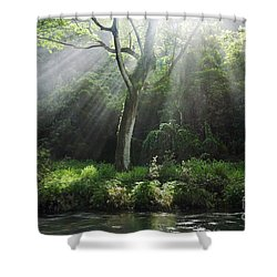 Sunlight Rays Through Trees Shower Curtain by M Swiet Productions