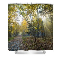 Sunlight Streaming Through The Trees Shower Curtain by Jacques Laurent