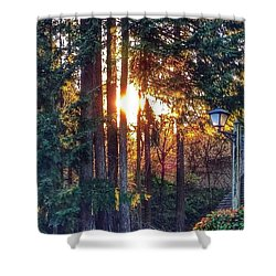 Sunlight Through Douglas Fir Trees Shower Curtain