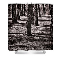 Shower Curtain featuring the photograph Sunlight Through The Forest by Greg Jackson