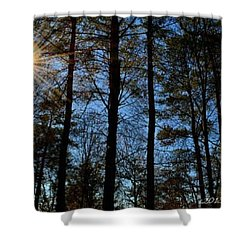Shower Curtain featuring the photograph Sunlight Through Trees by Tara Potts