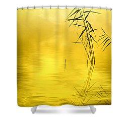 Sunlight Shower Curtain by Veikko Suikkanen