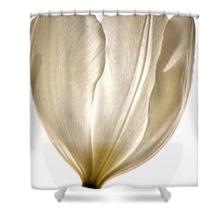 Sunlight White Shower Curtain by Deb Halloran