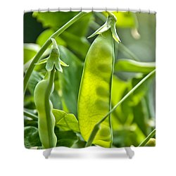 Sunlit Bounty Shower Curtain by Cheryl Baxter