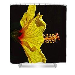 Sunlit Hibiscus Shower Curtain