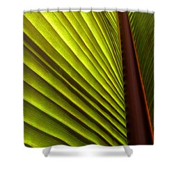 Sunlit Leaf Shower Curtain