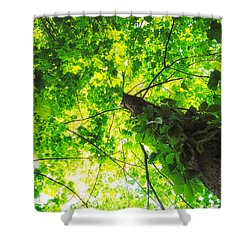 Sunlit Leaves Shower Curtain