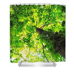 Sunlit Leaves Shower Curtain by Lars Lentz