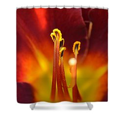 Sunlit Lily Shower Curtain
