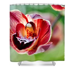 Sunlit Miniature Orchid Shower Curtain by Kaye Menner