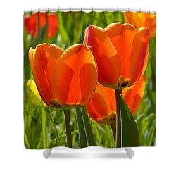 Sunlit Orange Tulips Shower Curtain by Rona Black