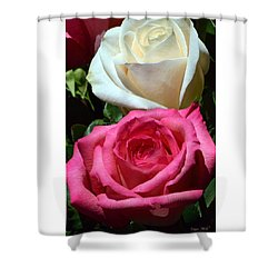 Sunlit Roses Shower Curtain by Marie Hicks