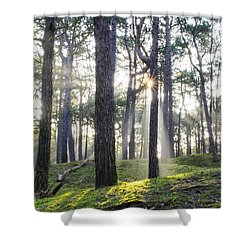Sunlit Trees Shower Curtain