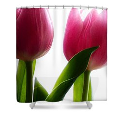 Sunlit Tulips Shower Curtain