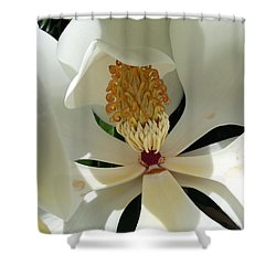 Sunny And Shy Magnolia Shower Curtain