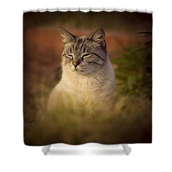 Sunny Days Like These Shower Curtain by Kim Henderson