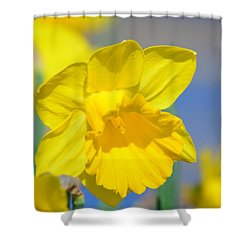 Sunny Days Of The Daffodil Shower Curtain by Maria Urso