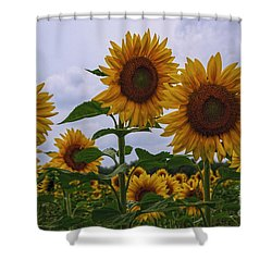 Shower Curtain featuring the photograph Sunny Faces by Debra Fedchin