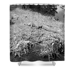 Shower Curtain featuring the photograph Sunny Gator Black And White by Joseph Baril