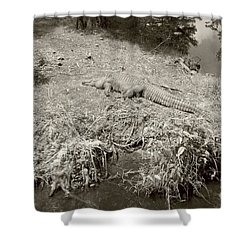 Shower Curtain featuring the photograph Sunny Gator Sepia  by Joseph Baril
