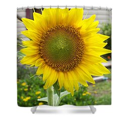 Bright Sunflower Happiness Shower Curtain by Belinda Lee