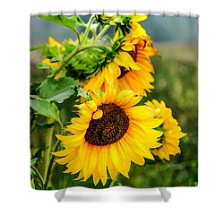 Sunny Meadow 1 Shower Curtain by Jenny Rainbow