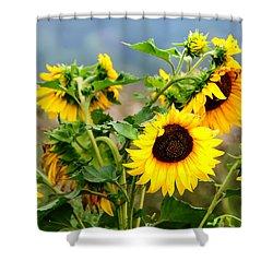 Sunny Meadow Shower Curtain by Jenny Rainbow