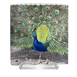 Shower Curtain featuring the photograph Sunny Peancock by Caryl J Bohn