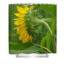 Sunny Profile Shower Curtain