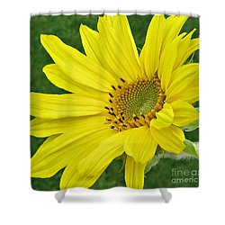 Shower Curtain featuring the photograph Sunny Side Up by Janice Westerberg