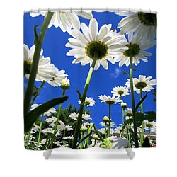 Sunny Side Up Shower Curtain by Pamela Clements