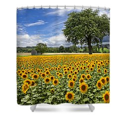 Sunny Sunflowers Shower Curtain by Debra and Dave Vanderlaan