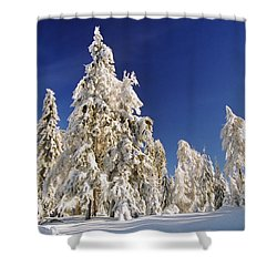 Sunny Winter Day Shower Curtain by Aged Pixel
