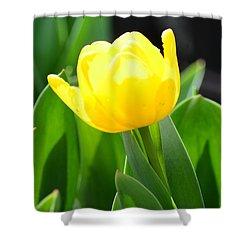 Sunny Yellow Tulip Shower Curtain by Maria Urso