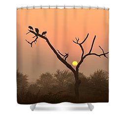 Sunrise At Bharatpur Shower Curtain by Fotosas Photography