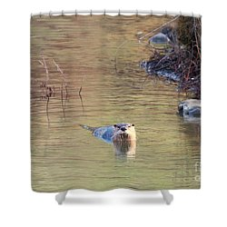 Sunrise Otter Shower Curtain by Mike Dawson