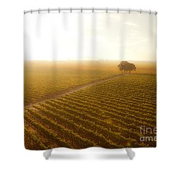 Sunrise Over The Vineyard Shower Curtain by Diane Diederich