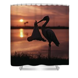 Sunrise Silhouette Of Stork Carrying Shower Curtain