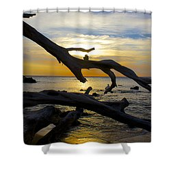 Driftwood At Sunset On Beach '69 Shower Curtain by Venetia Featherstone-Witty