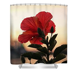 Shower Curtain featuring the photograph Sunset Flower by Cynthia Guinn