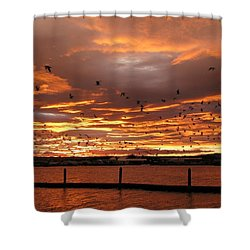 Sunset In Tauranga New Zealand Shower Curtain