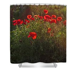 Sunset In The Poppy Garden Shower Curtain by Mary Wolf