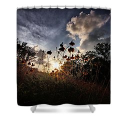 Sunset On Daisy Shower Curtain by Linda Unger