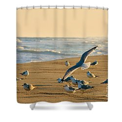 Shower Curtain featuring the photograph Sunset Respite by Kelly Nowak
