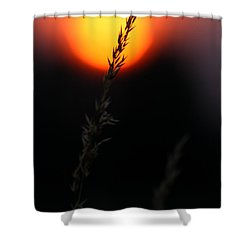 Sunset Seed Silhouette Shower Curtain